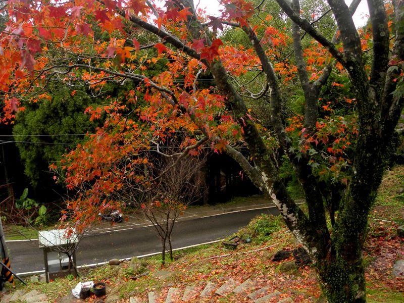 槭、楓林道