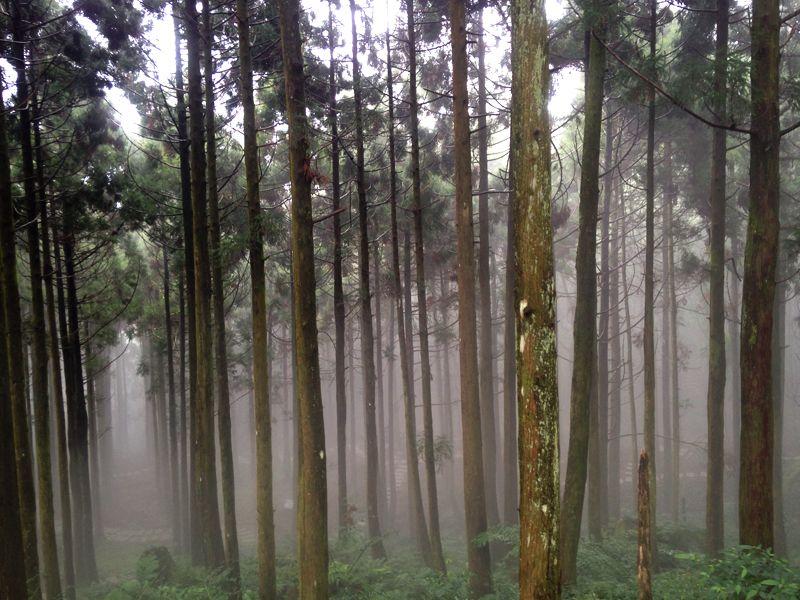 柳山林步道3.jpg