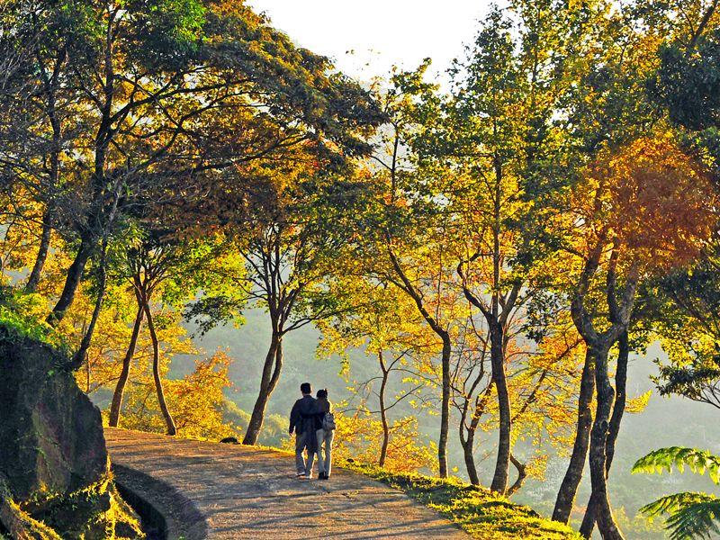 槭楓林道2.jpg